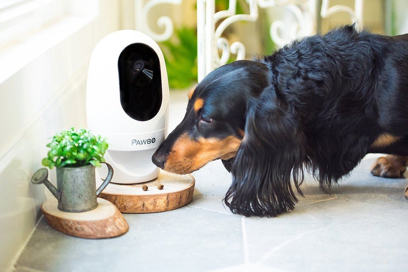 Pet Camera Systems – Are they necessary?