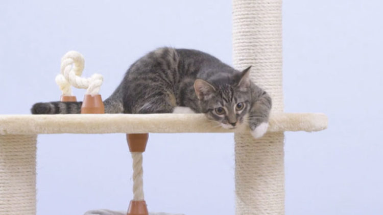 High Quality Cat Trees for your Pet