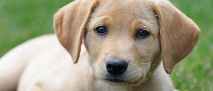 Common Behavior Changes in Senior Dogs