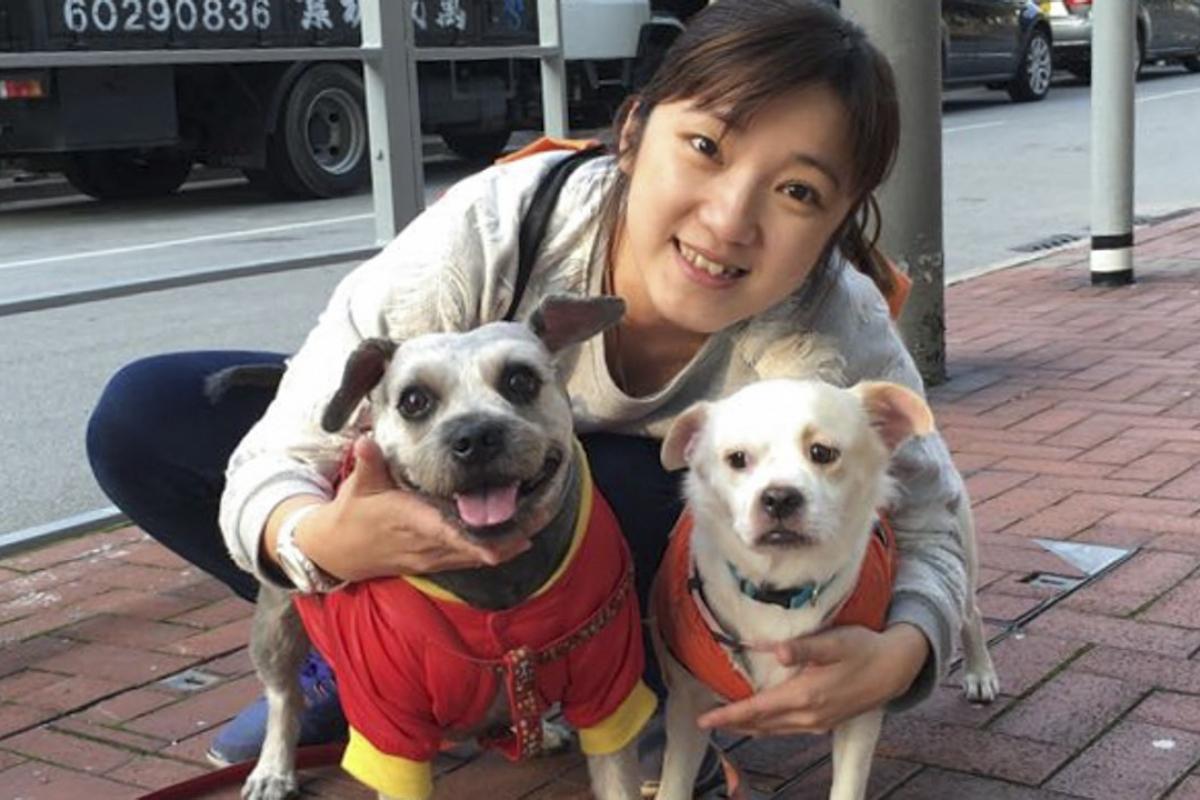 Choosing Among the Veterinary Clinics