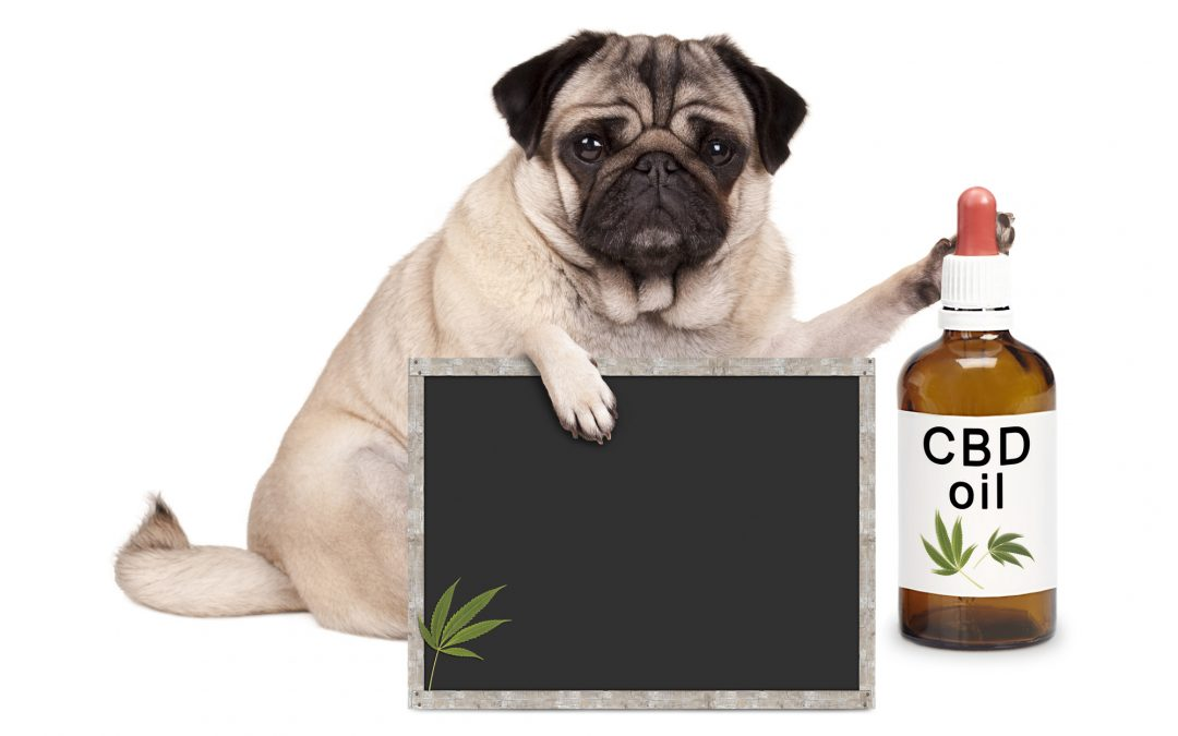 Is CBD treats safe for dogs?