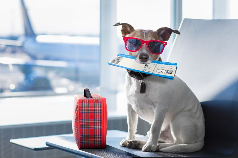Things to look for when finding a pet relocation service